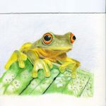 Lynette's Pencil Frog Drawing